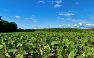 Warren County, Indiana Farmland Values, Price Per Acre Land for Sale SS soybeans 6